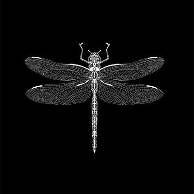Weisse Libelle auf Schwarz