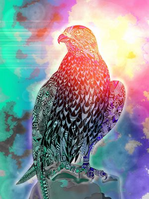 Falke im Sonnenlicht